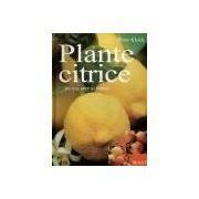 Plante citrice in apartamente, sere si gradini